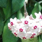 咲くやこの花館がとても楽しかった話