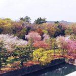 京都に行きました