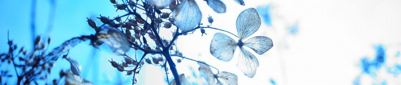 花浅葱のんびり日記